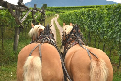 Carriage ride with wine