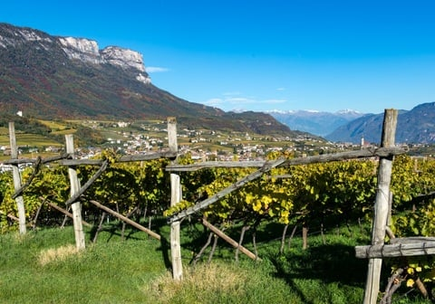 Video | Weinberge Kellerei St. Michael-Eppan